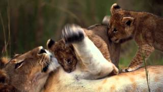 African Cats: Official Trailer