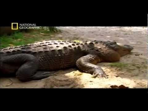 Los doce animales mas peligrosos del Mundo 2 7 teinteresasaber