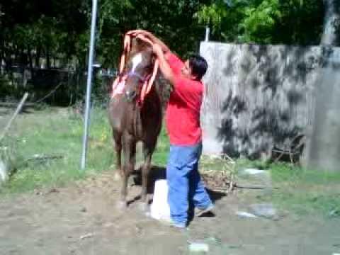 Xxx Mp4 Horse Ride 3GP 3gp Sex