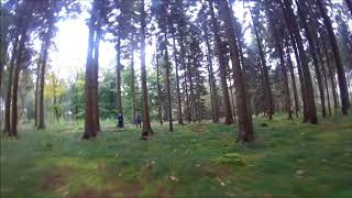 flying some forest