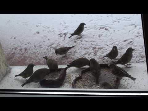 Co to są za ptaki