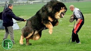 """أغرب أغلى 10 أنواع الكلاب في العالم """" لن تصدق سعرها الحقيقي """""""