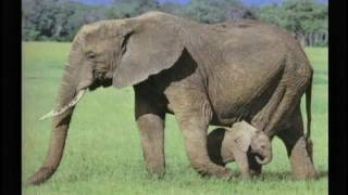 Kent Hovind - Seminar 3 - Dinosaurs in the Bible [MULTISUBS]
