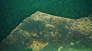 Amazon rainforest pays heavy price for Brazil