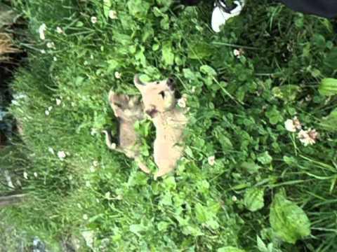 捨てられていた子犬3匹見つけたよ