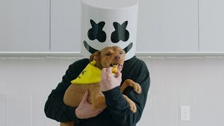 """How To Make """"Happier"""" Dog Treats   Cooking with Marshmello"""
