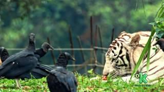 Liéser Touma - Seriado O Zoo da Zu