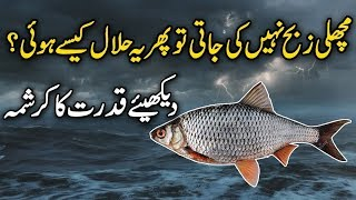 Why Fish Is Not Slaughtered But Still Halal In Islam | Urdu / Hindi