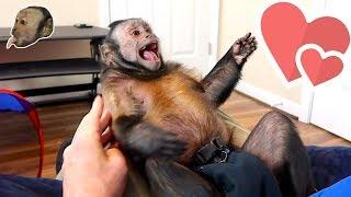 Monkey Playroom Fun | Having a Blast!