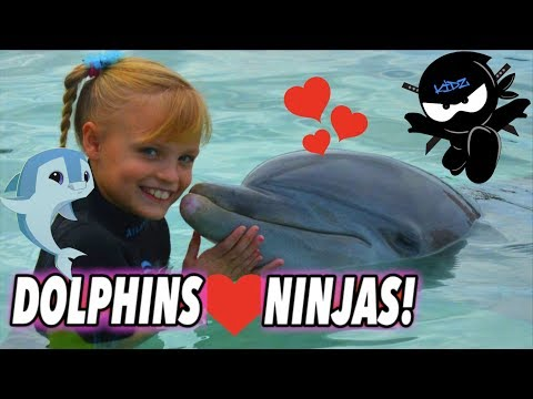 We Played and Swam with Dolphins Bahamas II Ninja Kidz TV
