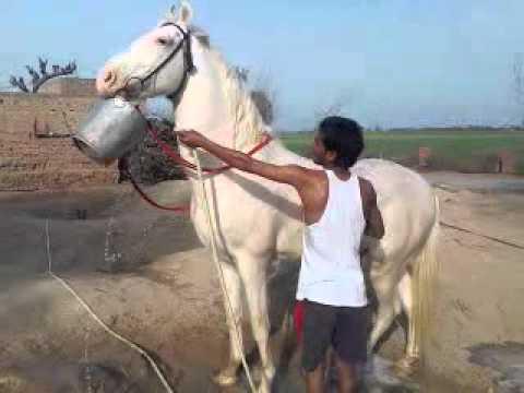 Xxx Mp4 Horse Taking Bath Himself 3gp 3gp Sex