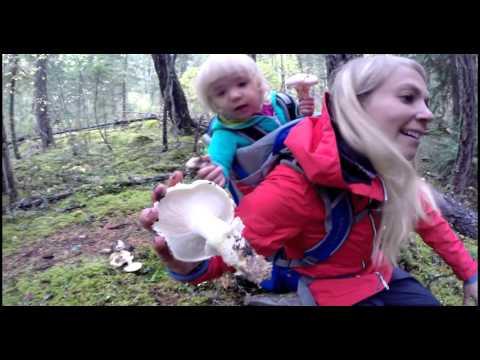 How to Find Matsutake Pine Mushroom Picking
