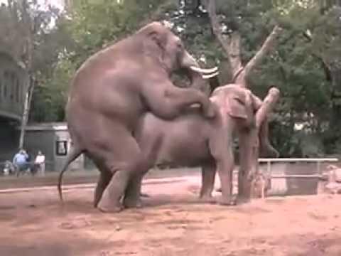 Xxx Mp4 Elephant Sex 3gp Sex