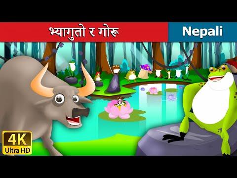 Xxx Mp4 भ्यागुतो र गोरू Frog And Ox In Nepali Nepali Story Story In Nepali Nepali Fairy Tales 3gp Sex
