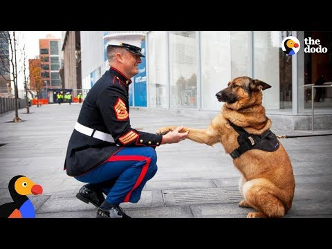 Soldiers Come Home To Dogs Compilation & More The Dodo Best Of