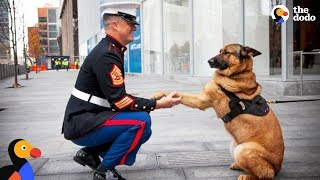 Soldiers Come Home To Dogs Compilation & More | The Dodo Daily