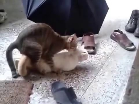 Xxx Mp4 Cat Sex 3gp Sex