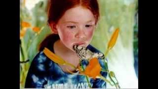 Pourquoi - Le Papillon - The Butterfly