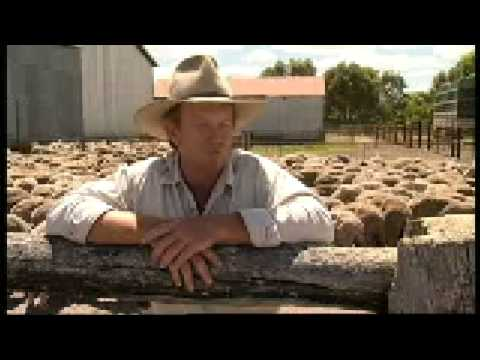 Live sheep export From farm to ship
