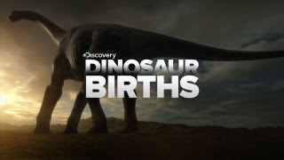 How Dinosaurs Are Born