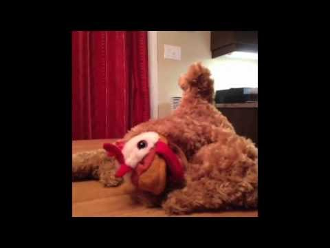 Xxx Mp4 OWL PORN YARD Week In Review 8 3gp Sex