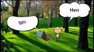 Birds name in Bangla and English