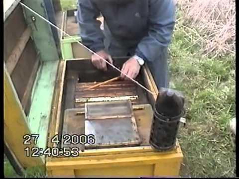 Pszczoły żywioł czy łagodne owady