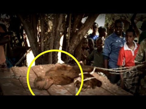 5 Extinct Animals Caught on Camera & Spotted In Real Life