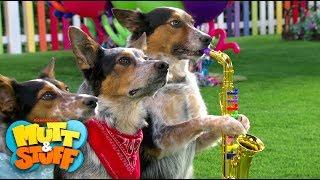 Dog Stars   Mutt & Stuff (2015)