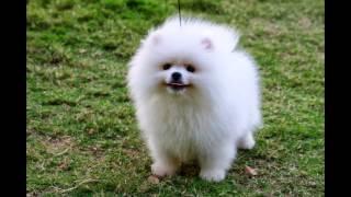 TOP 15 CUTEST DOG BREEDS