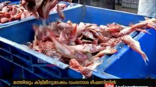 Fish drought in Kerala shores ചെറുമീനുകള് കേരളതീരത്ത് നിന്നും അപ്രത്യക്ഷമാകുന്നു