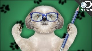 Can Dogs And Cats Be Left-Handed?