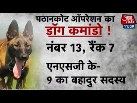Xxx Mp4 Pathankot Terror Attack NSG S Dog Commando Rocket Assault To Be Honoured 3gp Sex