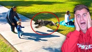 Unbelievable DOG Saves This BABY! **Miracle**