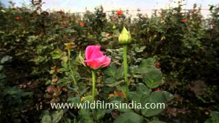 Floriculture could be the solution for north-east India