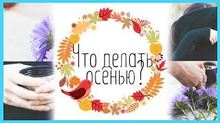 Картинки что делают осенью