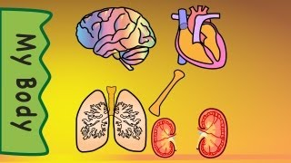 Body Organs