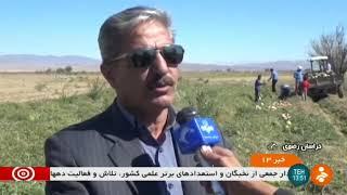 Iran Watermelon harvest for seeds, Khoushab county برداشت هندوانه آجيلي شهرستان خوشاب ايران