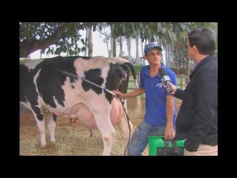 Xxx Mp4 Vaca Brasileira Bate Recorde Internacional De Produção De Leite 3gp Sex