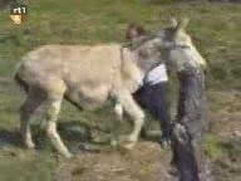 Xxx Mp4 Raped By Donkey 3gp Sex