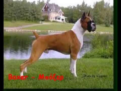 All Dog Breeds Όλες οι Ράτσες Σκύλω�