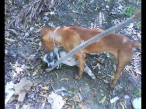 Extranormal malditos adolecentes golpean a un perro hasta matarlo.wmv