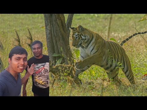 Xxx Mp4 Bangladeshi Bear Grylls Vs Wild Tiger Deer On Sundorbon Bangla Video 3gp Sex