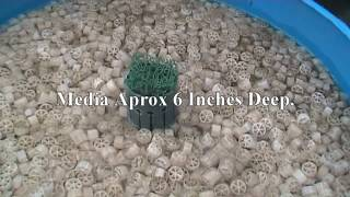 Koi pond filters uk video 3gp mp4 flv hd download for Easy clean pond filter