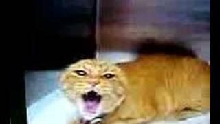 meget sur kat !!!!!