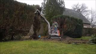 hedge remove small excavator - HEG Verwijderen kleine graafmachine