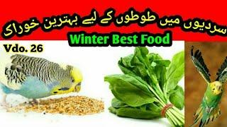 Best Food in Winter for Australian parrots, Sardi me best food in Urdu/Hindi by |Arham|. Vdo. 26