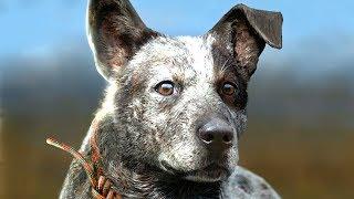 FAR CRY 5 BOOMER THE DOG GAMEPLAY WALKTHROUGH (E3 2017)