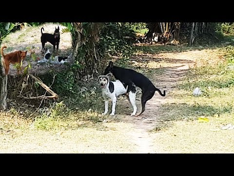 Xxx Mp4 PET WINTERS Life Of Dog At Village And Street Dog 3gp Sex