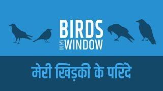 Birds in My Window